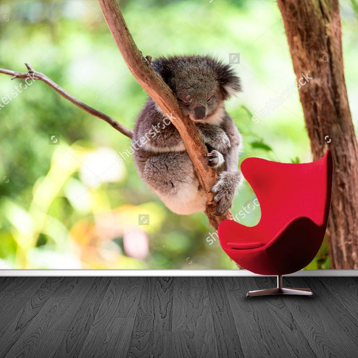 Fotobehang Slapende koala | Maak het jezelf eenvoudig en bestel fotobehang voorzien van een lijmlaag bij YouPri om zo gemakkelijk jouw woonruimte een nieuwe stijl te geven. Voor het behangen heb je alleen water nodig!   #behang #fotobehang #print #opdruk #afbeelding #diy #behangen #koala #slapen #slaap #lief #schattig #meisje #meisjeskamer #meidenkamer #natuur