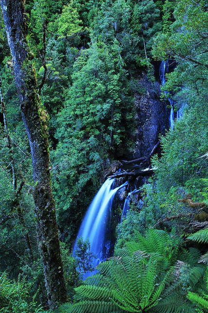 Philosophers Falls, Tarkine, Tasmania by macca_1985, via Flickr