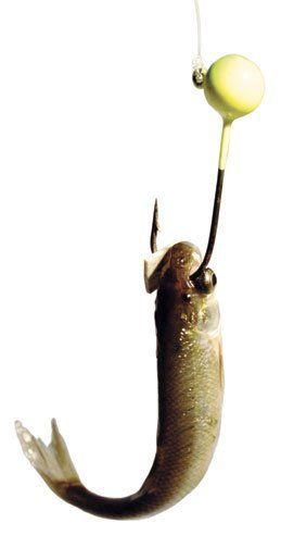 Tired of having minnows mysteriously fly off your hook when casting? Hook your minnow, then follow with a small chunk of 3 to 5 millimeter-wide rubber band square over the hook tip, just past the barb.