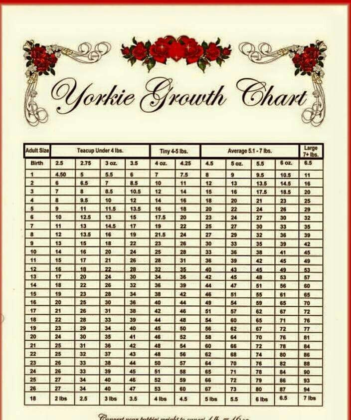 Growth Chart Yorkiepuppygrowthchart Puppy Growth Chart Weight