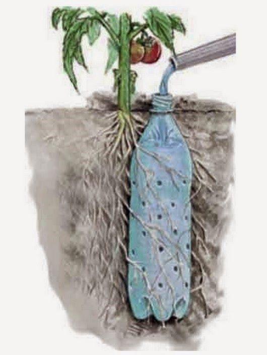 Орошай растения, используя пластиковые бутылки с отверстиями.