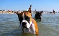 Dog Beach in San Diego - there is a frenchie in the background.  Done and done!