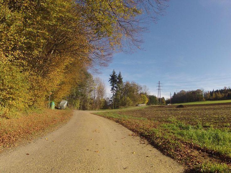 Um die Mündung der Aare in den Rhein  Vollständiger Bericht bei: http://agu.li/1HN  Eine weitere herbstliche Runde. Soweit möglich habe ich versucht, diese Strecke entlang von sonnigen Waldrändern oder in der Nähe von Rebbergen zu fahren und kam so nochmals zu einen paar schönen Augenblicken von bunten Blättern. Das GPS registrierte: 61.4 KM und 734 Höhenmeter.