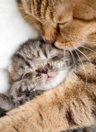 母猫が子猫をハグ