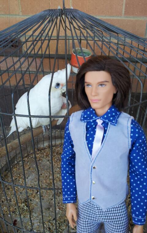 My pet bird and my ken doll