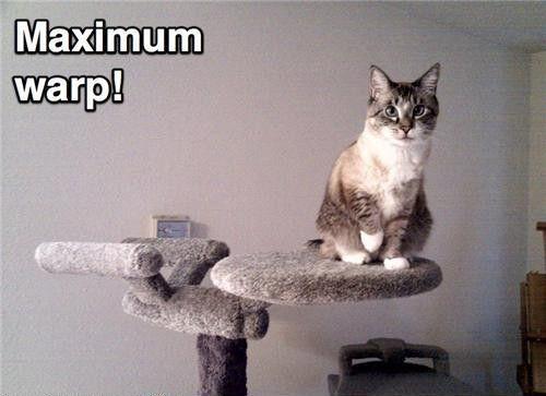 Funny Star Trek | funny, funny cats, star trek, cat, Star ...