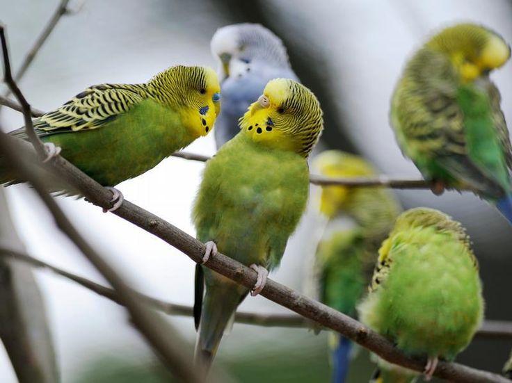 Vögel nicht mit Avocados füttern