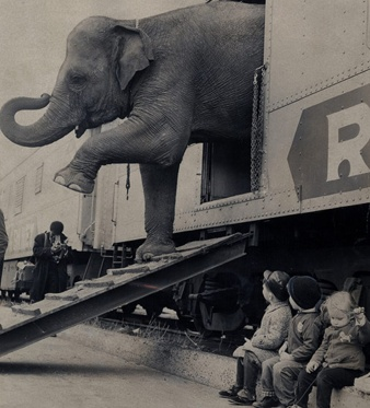vintage circus elephant picture. I was there in Ft. Worth Texas (age 8) when they got the elephants off of the train to put up the Ringland Brothers Circus Tent, it was the last year that Ringland Brothers used tents, because there were arenas big enough for the circus to perform in, this was late 40's.