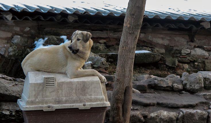 犬とハウスケージサークルクレート違いや特徴選択のポイント
