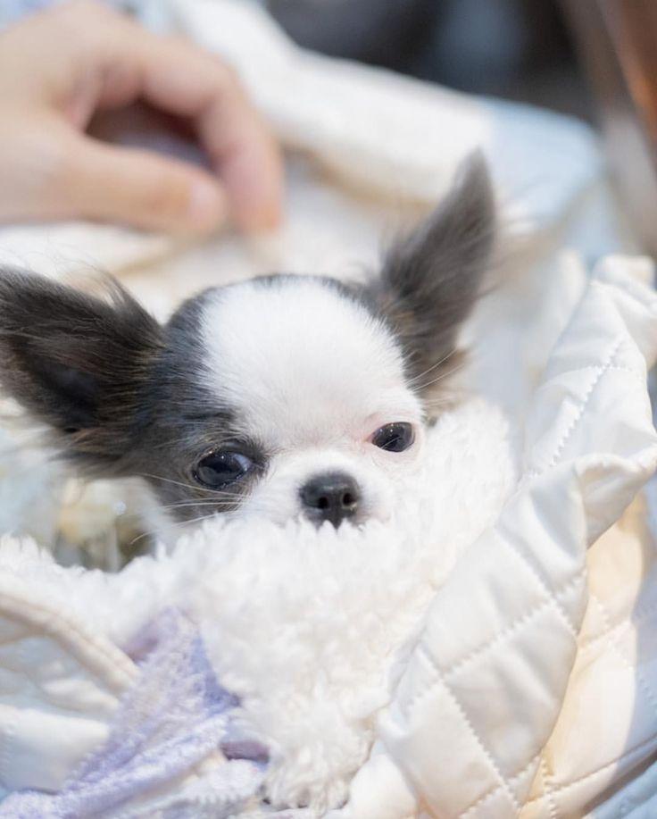 29+ German shepherd puppies for sale in milwaukee wisconsin inspiration