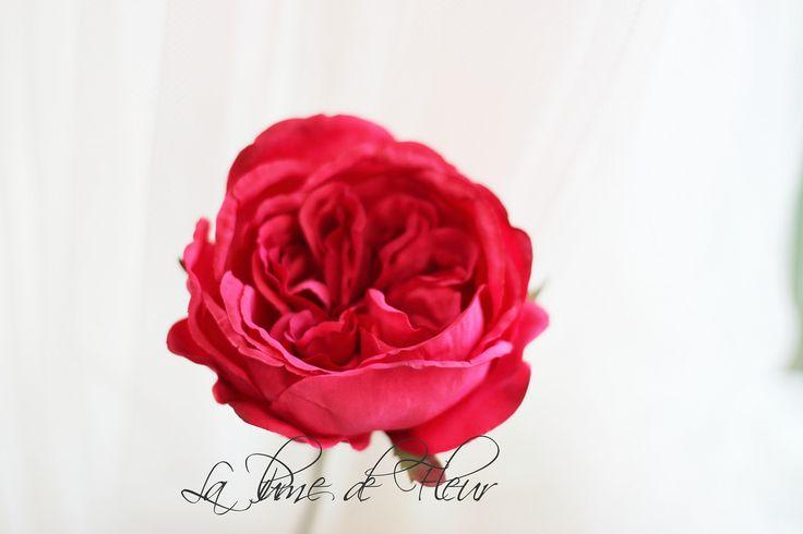 Maya hot pink rose