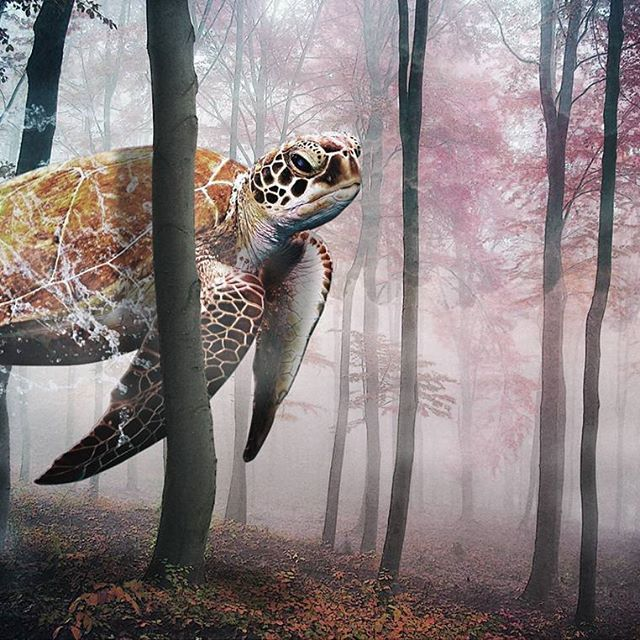【panpy.panpy】さんのInstagramの写真をピンしています。《Composite Photograph #design#graphic#graphics#graphicdesign#art#artwork#composite#collage#logo#photo#picture#woods#turtle#fog#float#floating #photoshop#illustrator #デザイン#グラフィック#コラージュ#アート#アートワーク#合成#霧#亀#カメ#かめ#森#林》