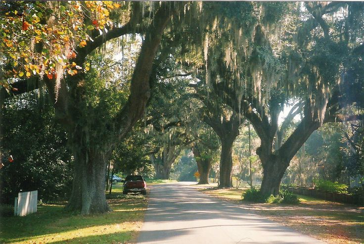 Oak lined street in the historic Victorian village of McIntosh