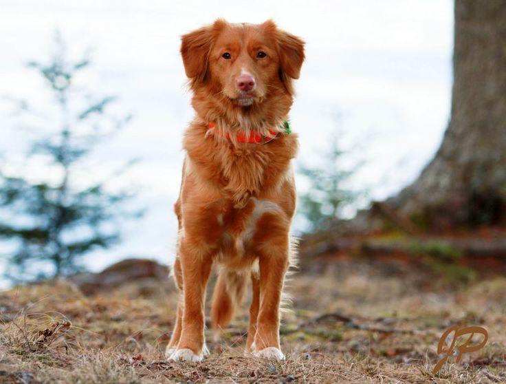 Scotia Dog Training