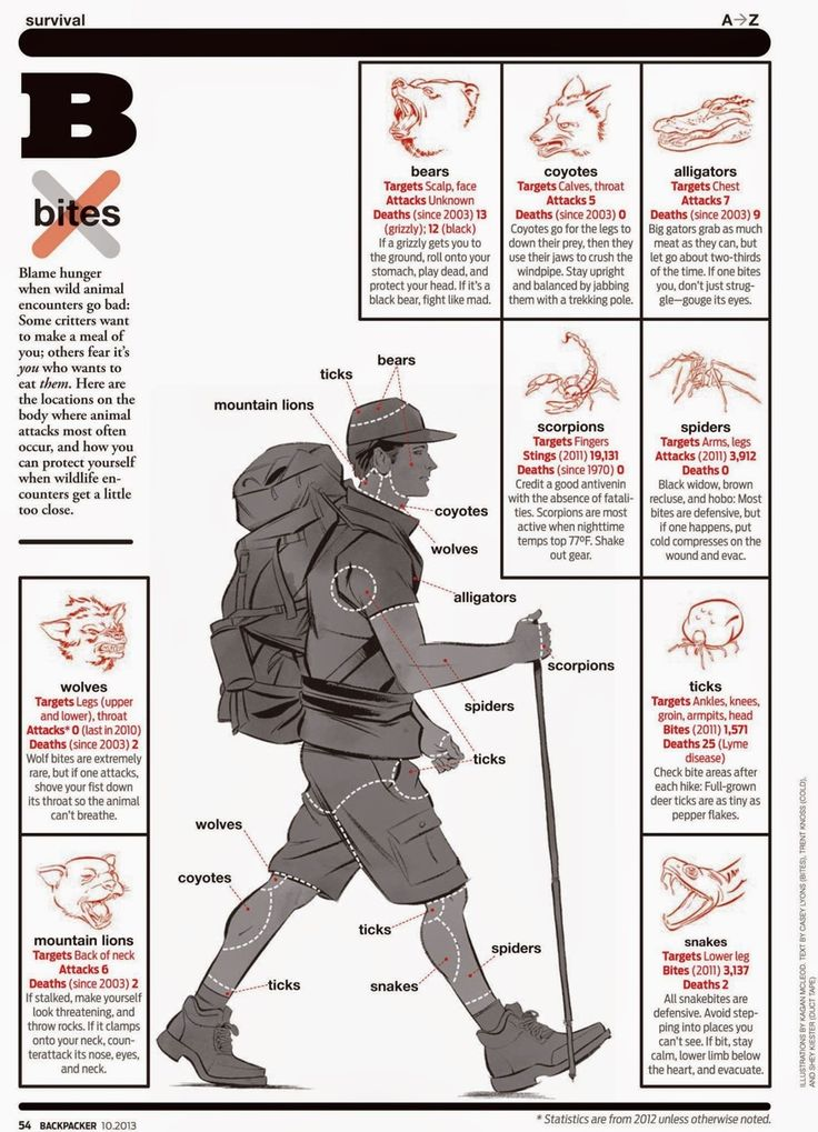 good chart for avoiding animal attacks while hiking/camping/etc.