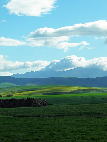 Farm fields near Swellendam.