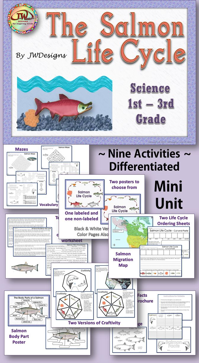 This unit is a fun science pack, all about salmon. These activities are differentiated, so that they can be used in 1st – 3rd grade. There are two complete sets, so that you can choose between a color or a black & white version.  Posters, craftivity, worksheets and puzzles.