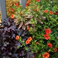 container gardening picture of fall container garden