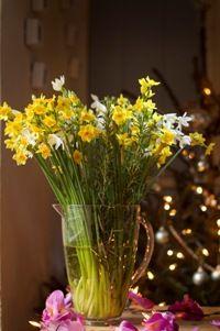 Standard Box of Flowers and Festive Foliage CHRISTMAS SHOP > Christmas Flowers