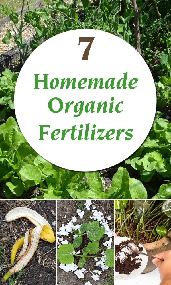 Easy Green Alternatives To Chemical Fertilizers That Will
