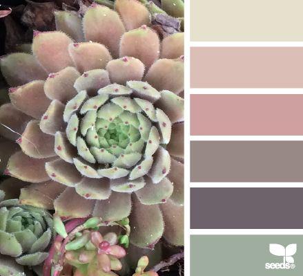Succulent Hues - design-seeds.com/index.php/home/entry/succulent-hues23  color combination, color palettes, color scheme, color inspiration, visual communication.