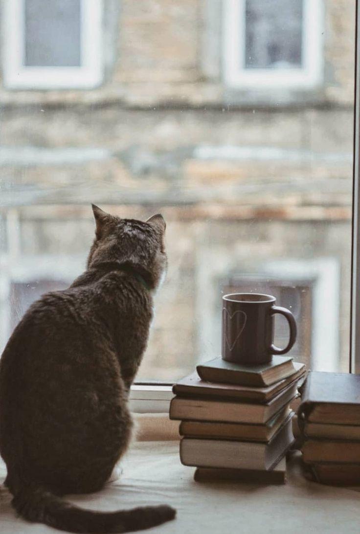 Картинки котенок на подоконнике