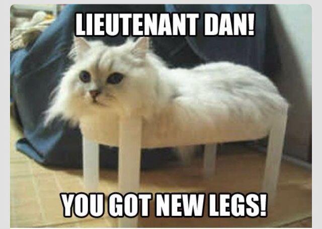 Lieutenant Dan Cat Meme