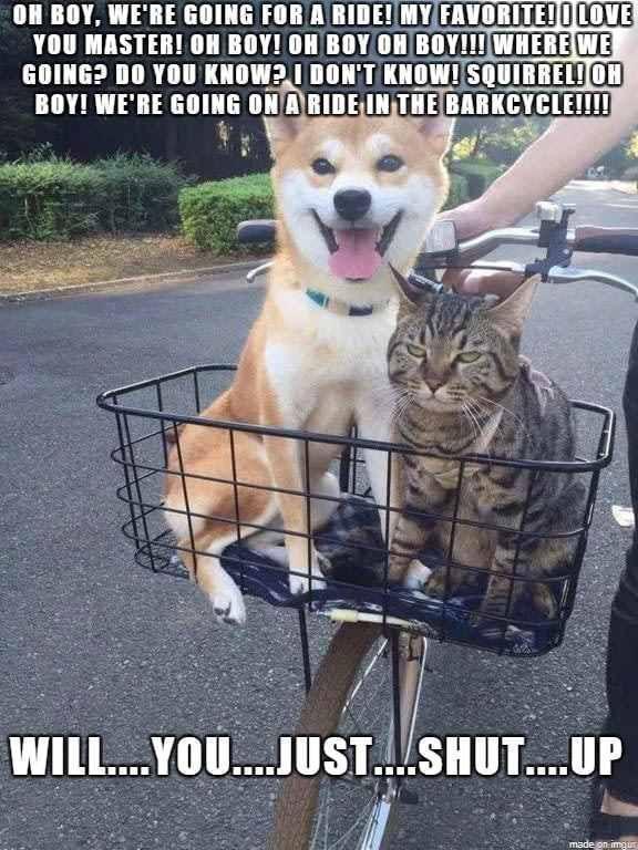 Grumpy Cat Is Grumpy Trenduso Grumpy Cat Dog Bicycle Funny Memes Meme Hilarious Https Www Tr Funny Animal Pictures Funny Animals Cute Funny Animals