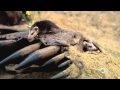 Video - Mosasaurus - Binatang Karnivora Laut Prasejarah Terbesar - Bagian 5