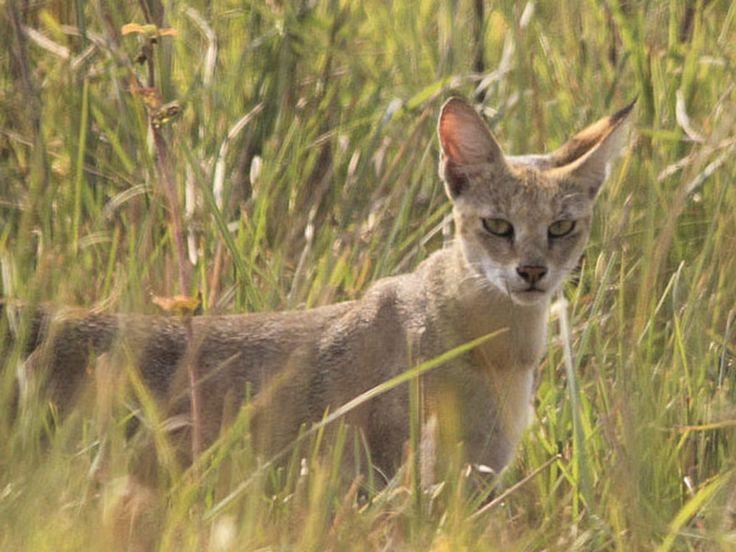 Bori Wildlife Sanctuaries - in Madhya Pradesh, India