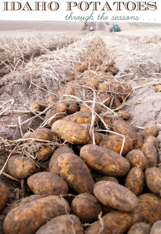 Idaho Potatoes Through The Seasons: Top Food Bloggers Share Their Favorite Potato Recipes for Every Season!