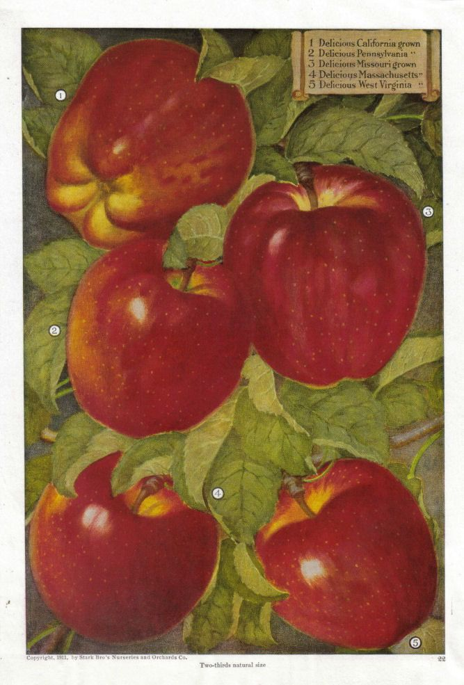 Apple kitchen decor catalogs fruit kitchen decor red for Apple home decoration