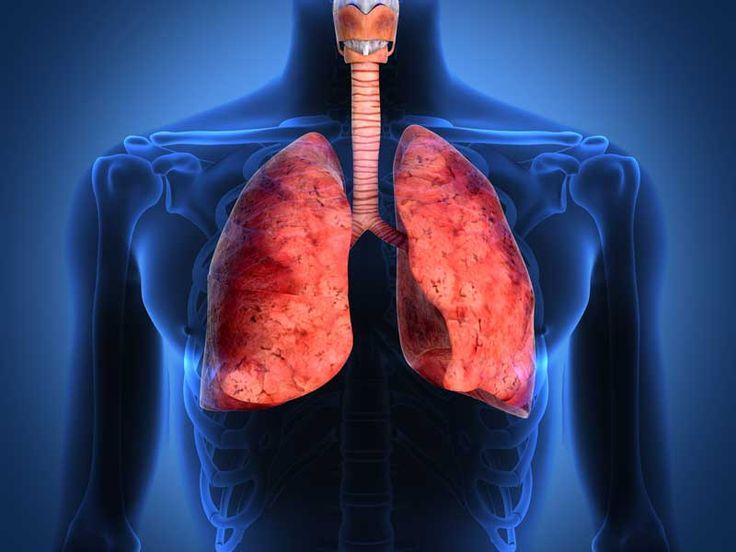 Lo que debes saber de la fibrosis pulmonar - AMEFIP __Entre los principales síntomas de la fibrosis pulmonar idiopática se encuentra la dificultad para respirar, la tos persistente, las crepitaciones o sonido tipo velcro al exhalar el aire, el dolor en el pecho, la fatiga y la pérdida de peso.