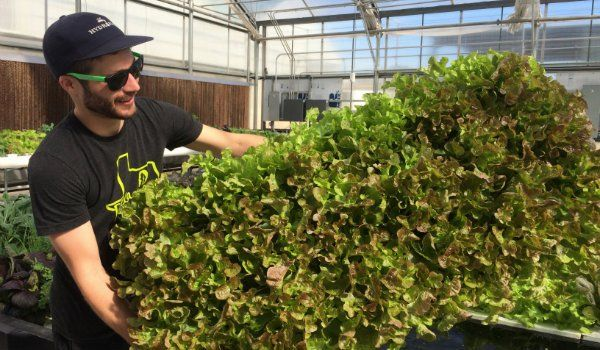 When it comes to changing from conventional to organic hydroponic production methods, there are three main areas that growers find most challenging. Tyler Baras, special projects manager at Hort Am…