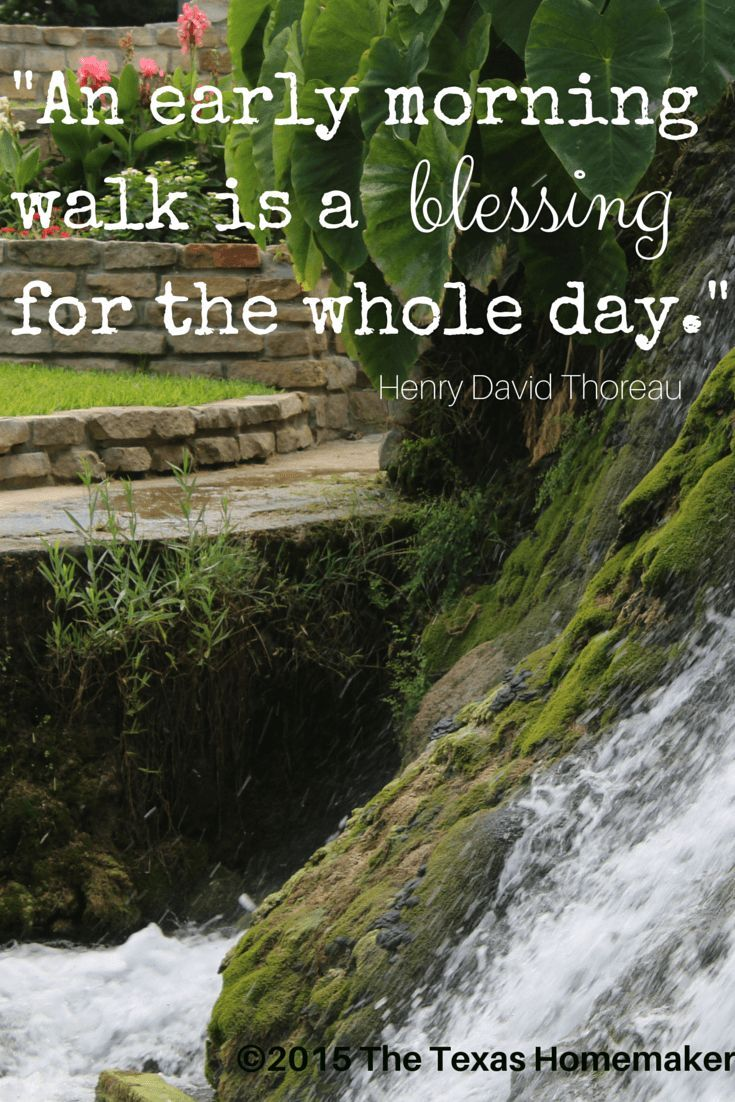 Early Morning Blessing Quotes: 25+ Best Ideas About Henry David Thoreau On Pinterest