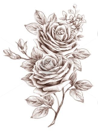Freehand drawing rose 01 stock photo, Old-styled rose. Freehand drawing by Tang…