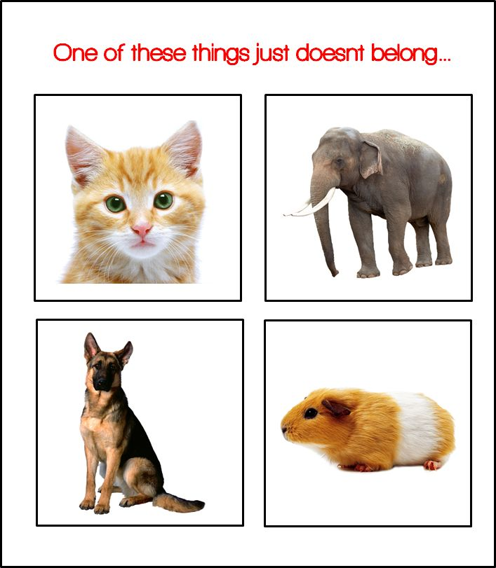 Classification Game for Preschool - What does not belong? Topic: Pets