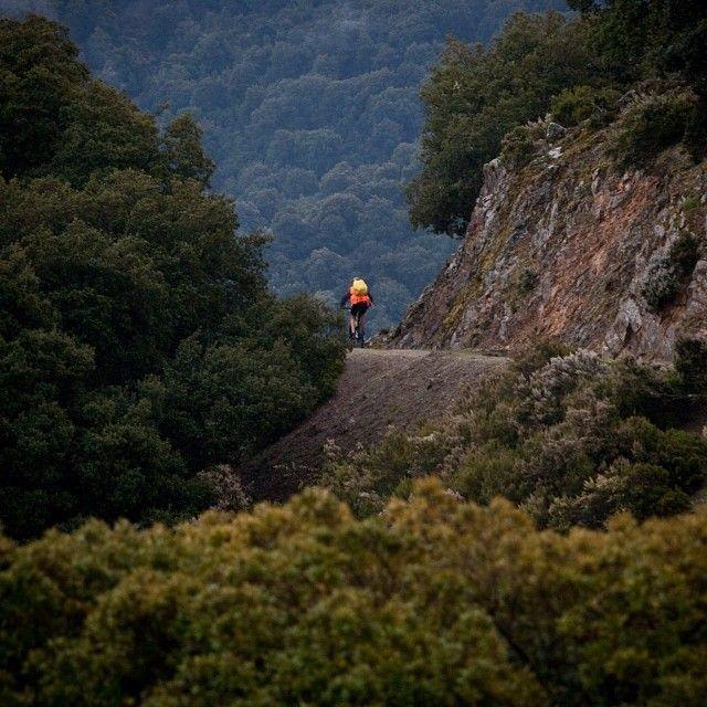 Un'escursione in mountain bike immersi nei profumi e colori della macchia mediterranea del #Supramonte.  Un'esperienza che si può vivere in ogni stagione dell'anno in #Sardegna #mtb #sardinia