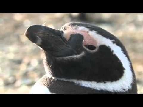 Ep 6: How have penguins adapted?