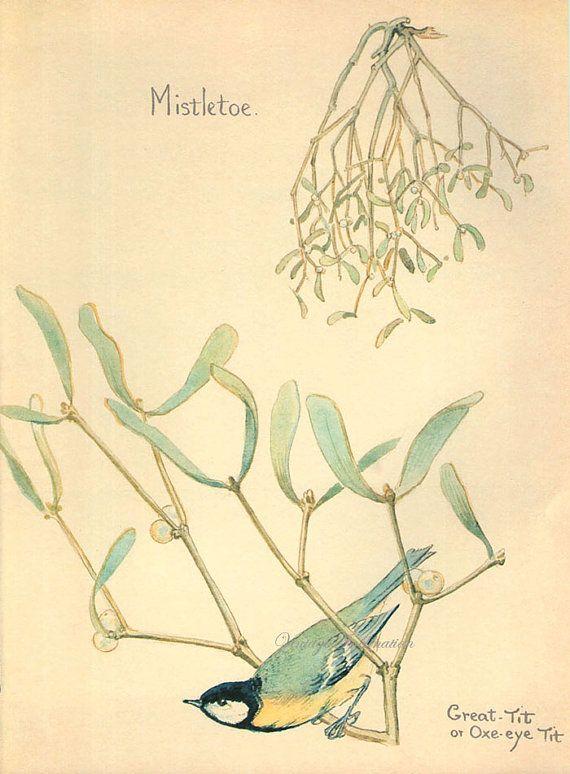 antique print mistletoe english plants by