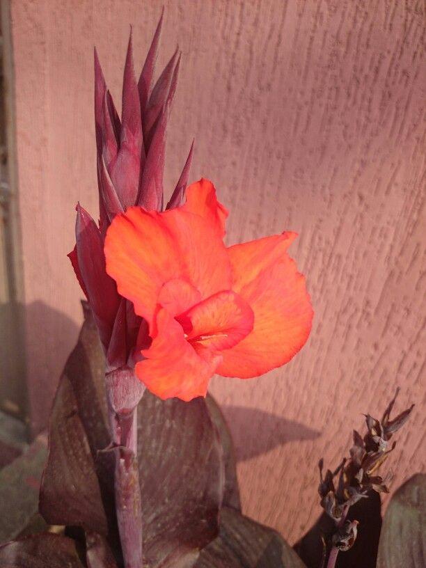 # flor #flower