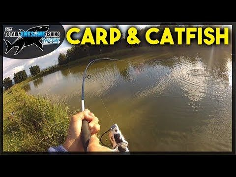 Catfish and Carp Fishing