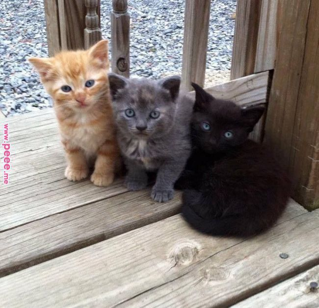 Three Cute Little Kitten Cute Cats And Kittens Cats And Kittens