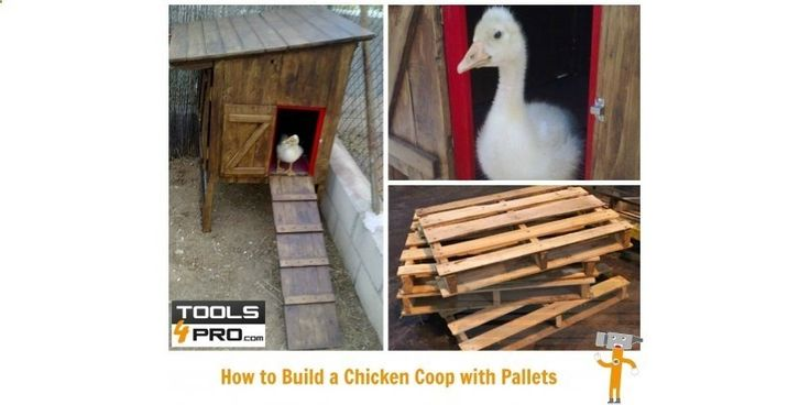 How to Build a Chicken Coop with Pallets: One of the most pleasant projects to develop by using wood is the construction of a home for a pet. In this tutorial we will show you how to build a home for geese, although it could also serve as a poultry house or a cosy home for any small animal. #Diy #ideas #inspiration #homeimprovement #pallets uk.tools4pro.com