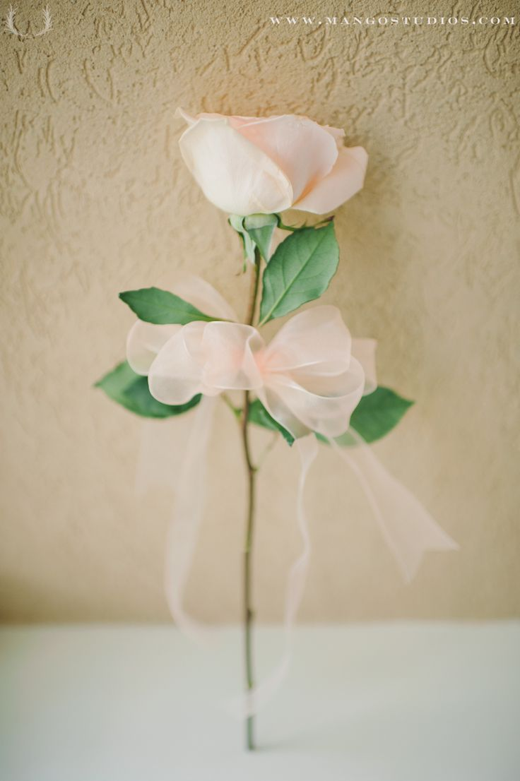 white rose with navy organza ribbon  Single Rose Bouquet
