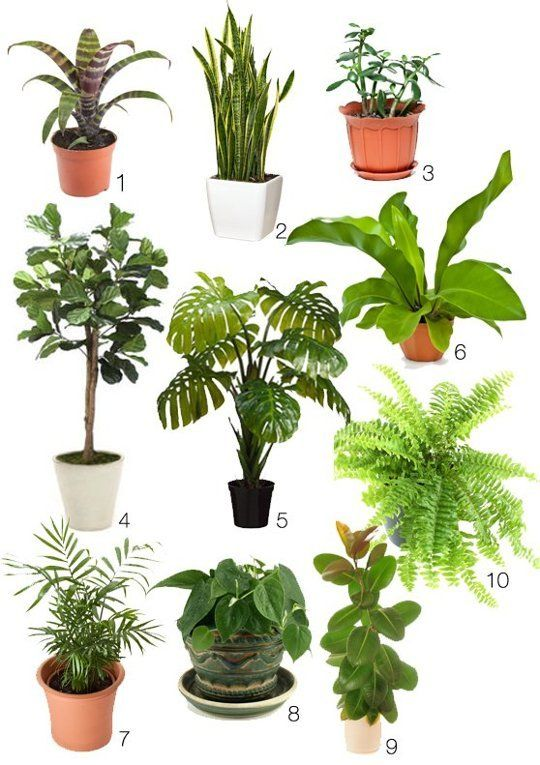 10 Great Indoors Plants - Chosen for their look, their ability to grow great indoors and some even for their hard-to-kill properties: