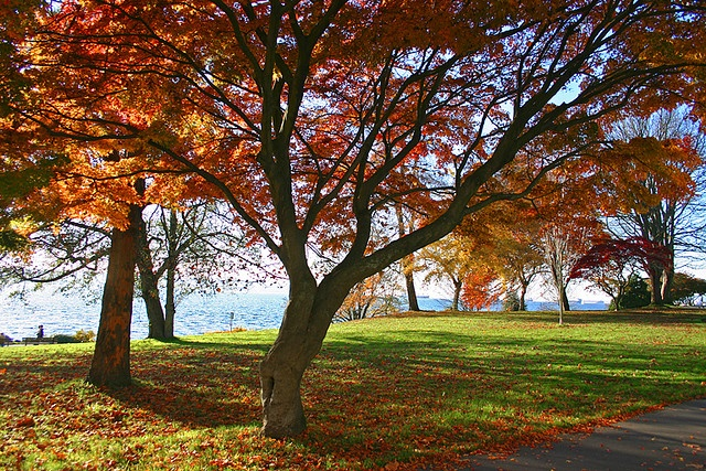 Love the red leaves on the tree in the bottom right... Stanley Park