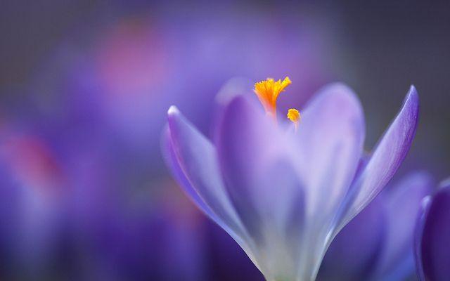 #Crocus #top15 #March #Flowers #marzo #primavera #spring #nature #natura #flower #fiori #flowerpower #iloveflower