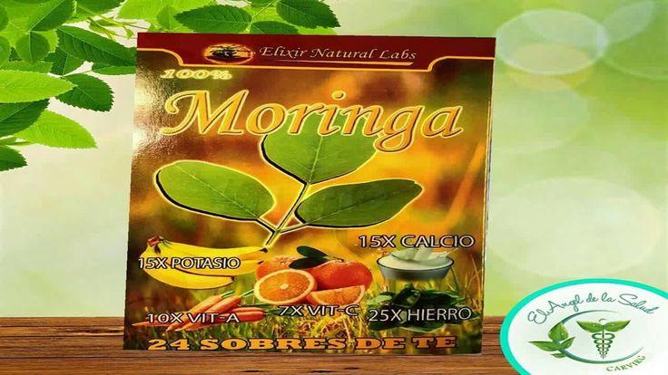 Que Es La Moringa Y Para Que Sirve  Moringa Planta Medicinal Para Q Sirve