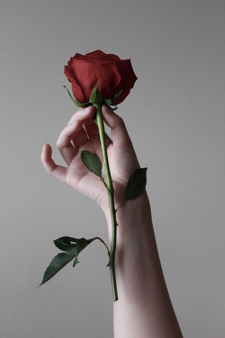 Only One In 2021 Rose Flower Wallpaper Rose Flower Pictures Dark Red Roses Fantastic rose flower wallpaper